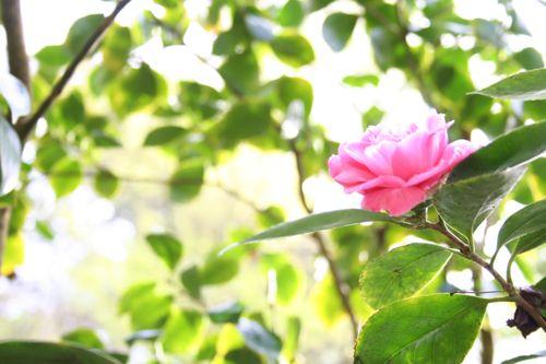 2010_03_24_rose