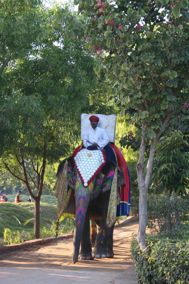 Barat elephant