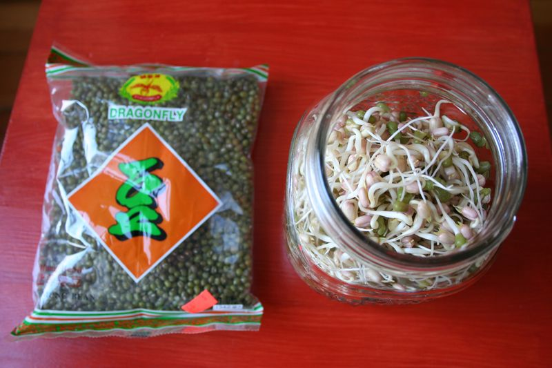 Mung beans with jar of sprouts