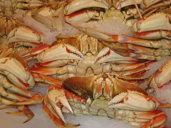 Crabs_dungeness